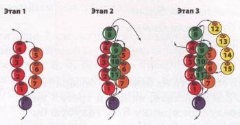 Техника плетения жгута