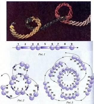 схема спирального жгута из бисера
