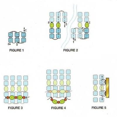 павлин из бисера схемы плетения