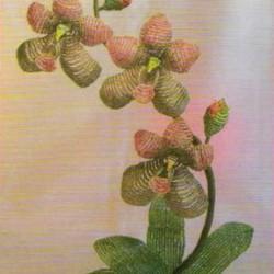 цветок орхидеи из бисера