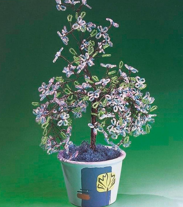 Глициния бисерное дерево