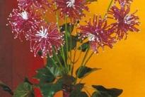 Белые и бордовые хризантемы