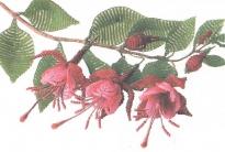 цветок фуксии из бисера