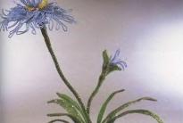 голубой японский ирис