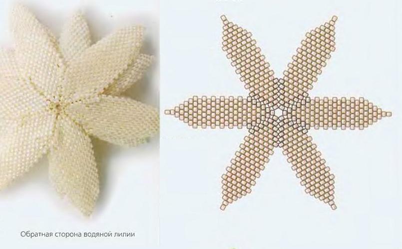 схема белой водяной лилии из