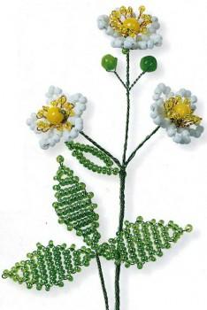 белые цветы земляники