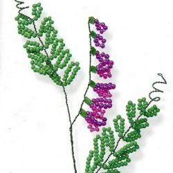 цветок мышиный горох