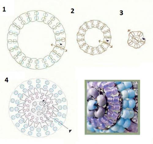 Схема колечек для кольца-ракушкой