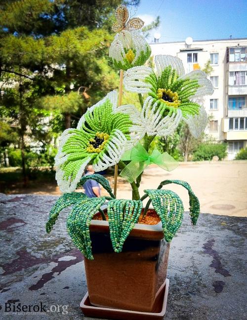 французский цветок