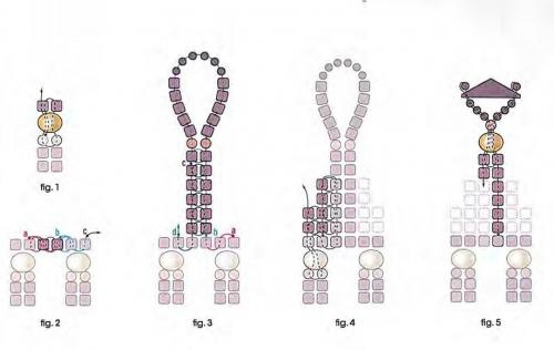 застежка из бисера и бусин. схема застежки кулона.