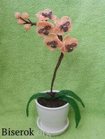 Orchid Bead.  Орхидея из бисера.
