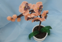 Плетение орхидеи