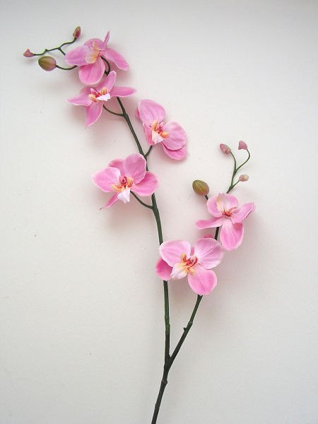 розовой орхидеи с круглыми