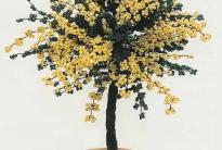 Дерево мимозы