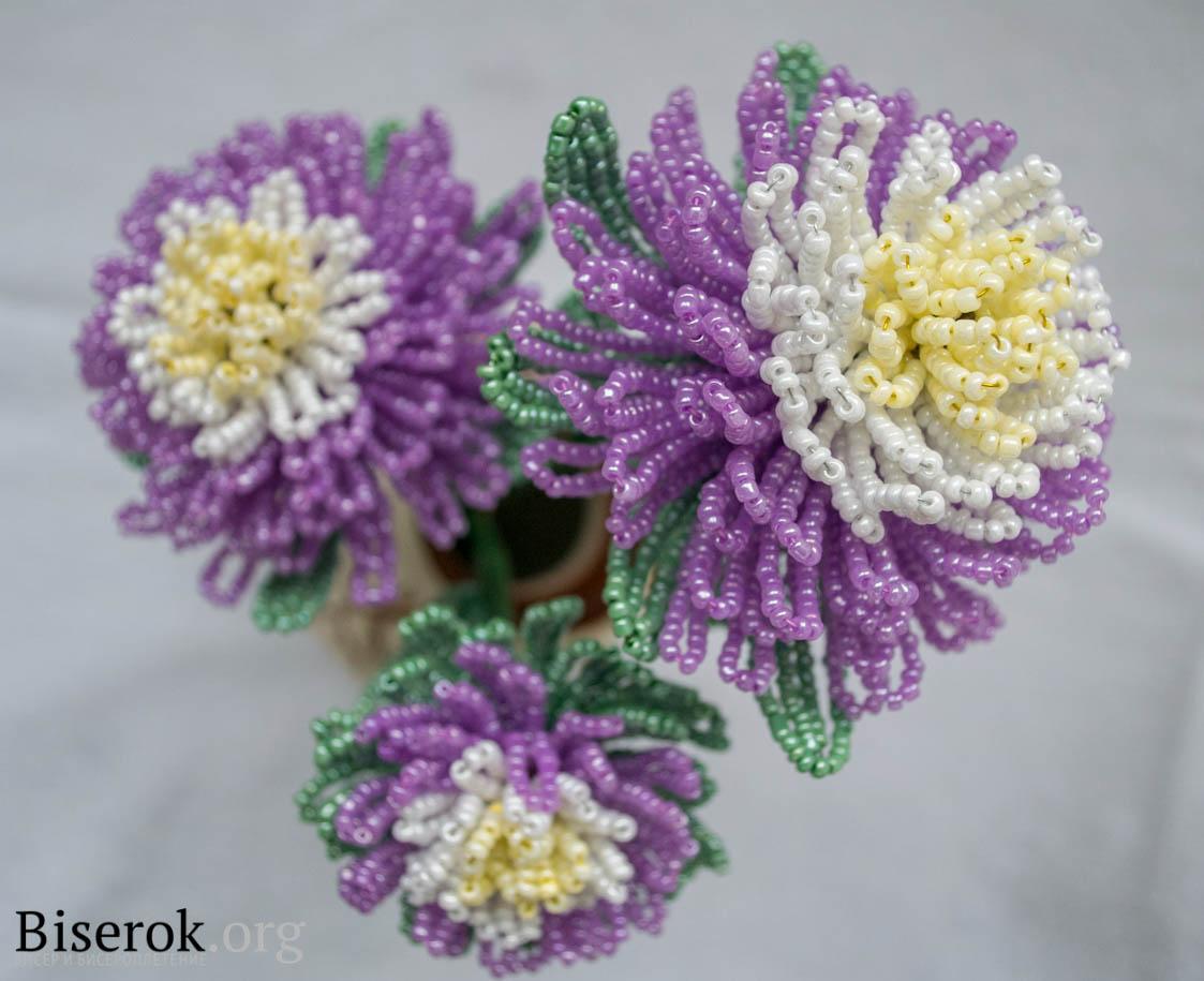 Астра или хризантема.