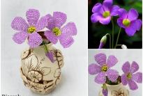 Фиолетовые цветы (Кислица)