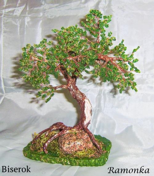 зеленый бонсай