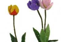 простой тюльпан