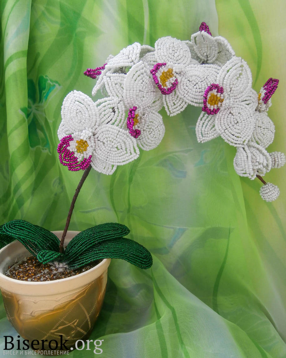 Белая орхидея из бисера схемы плетения