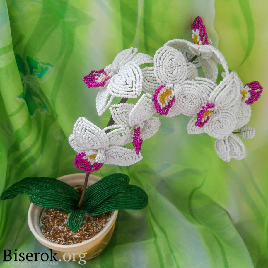 голубая орхидея из бисера мастер класс схемы плетения