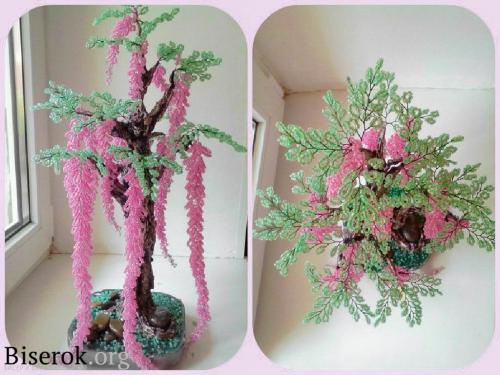 дерево глицинии